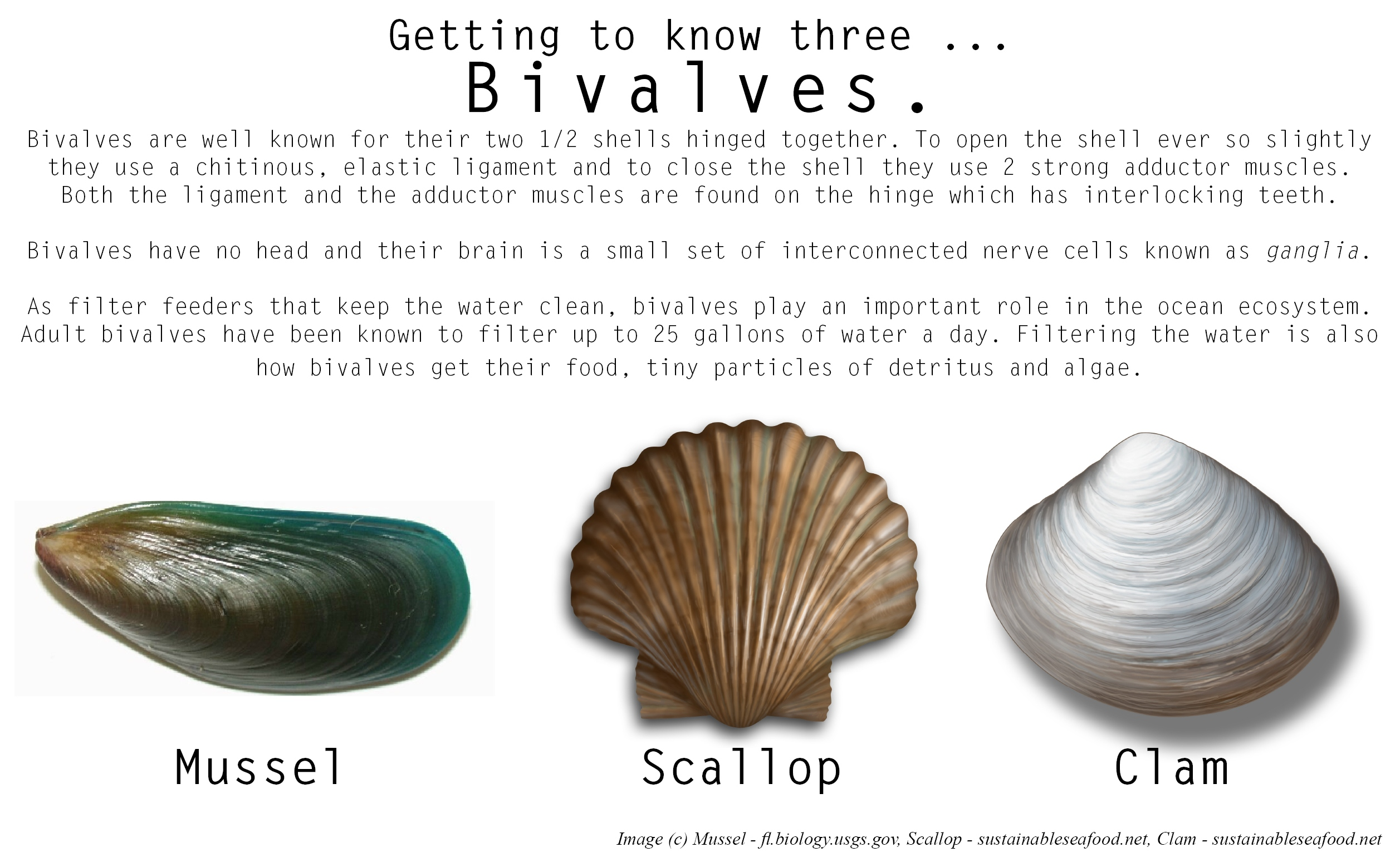 Getting To Know Three Bivalve Edition