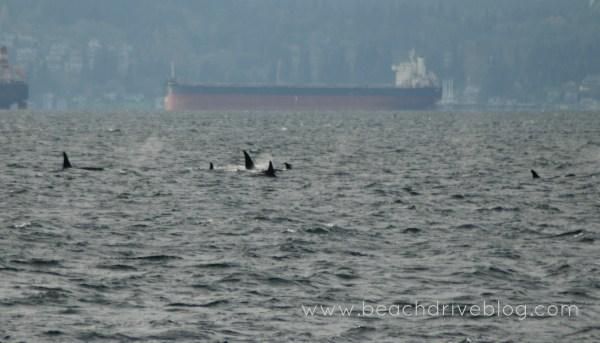 orcas nov 10 2015 a