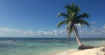 Swaying palm tree on a white sand beach and clear turquoise sea