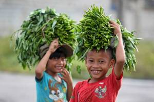 """Two smiling Indonesian """"Niha"""" children carrying kangkung (water spinach) on their heads for pig feed"""