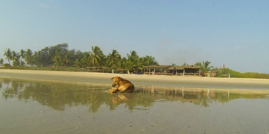 Beach dog lying in the shore in front of a beach resort