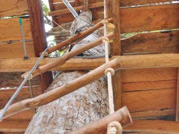 Rope ladder leading to wooden tree platform