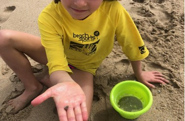 South Bay Marine Life: What's Living In Our Seas?