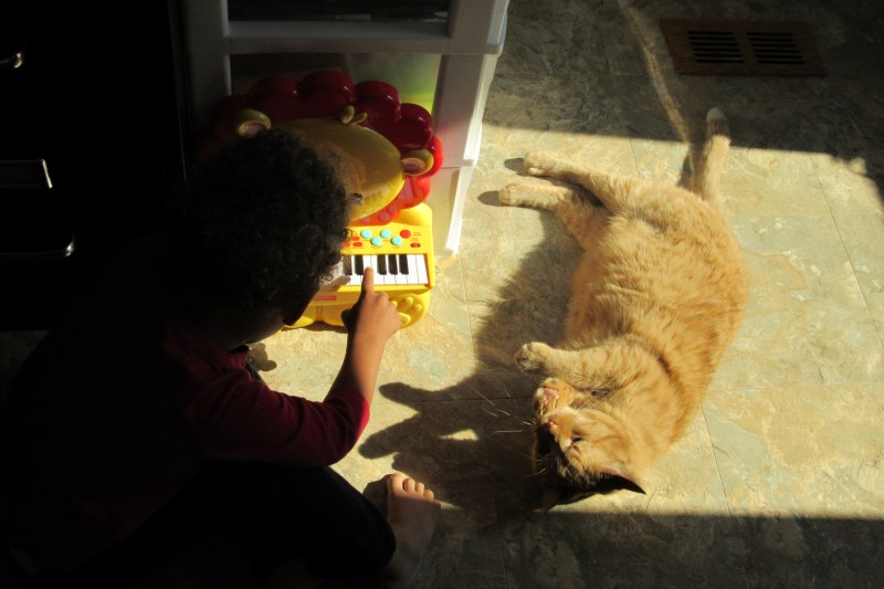 Little J playing his Fisher Price Lion Piano. Our cat watches.