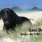 photo of Lexi Dogg on the beach in Lanikai, 2000 - 2014