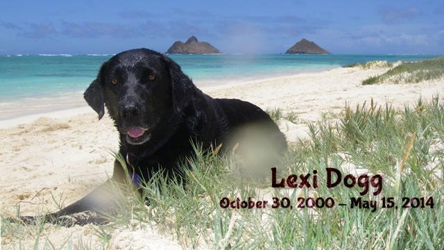 photo of Lexi Dogg on the beach in Lanikai, 2000 - 2014