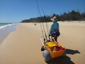 Sheri meets a dingo on her Fraser Island Adventuring