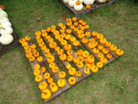 <p>#7. Little Pumpkins.jpg</p><p></p>