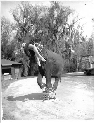 <p><p><strong>PRACTICE MAKES PERFECT</strong>— Liz Dane and Queenie practice routines together. While their main event was water skiing, Dane and her elephant companion had plenty of other tricks they could perform.</p></p><p></p>