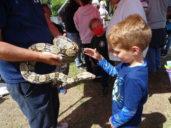 <p><p>Would you pet a snake?</p></p><p></p>
