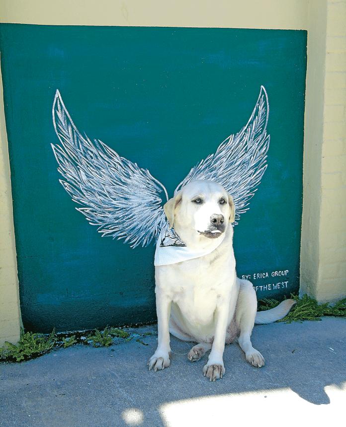 Dog at DeLand Wings