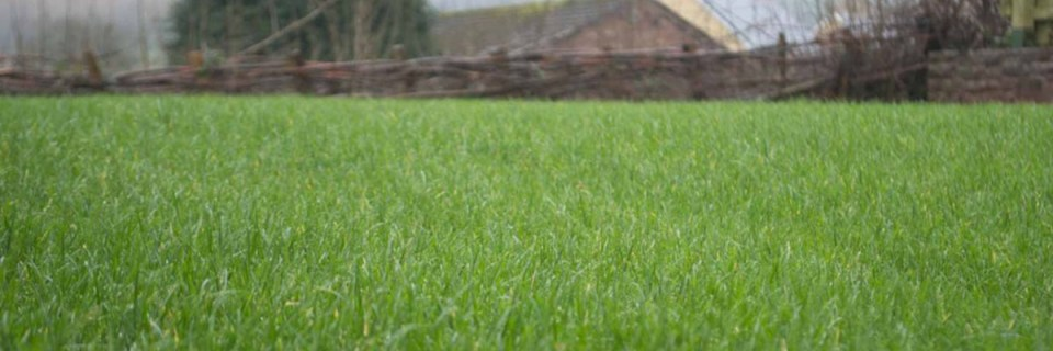 Your lawn and landscape the way that it should be