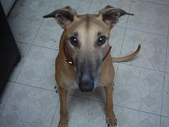 Rider Greyhound loves you