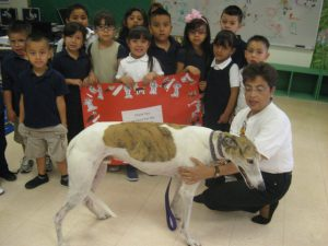 5 year old kids learn about greyhounds