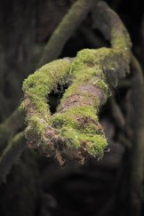 Beautiful moss covered branch