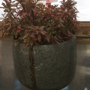 Metal Galvanised Wall Planter with Brass
