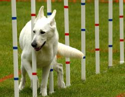 ky_ag_doing_agility_035