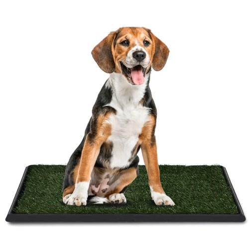 Beagle Potty Training Techniques