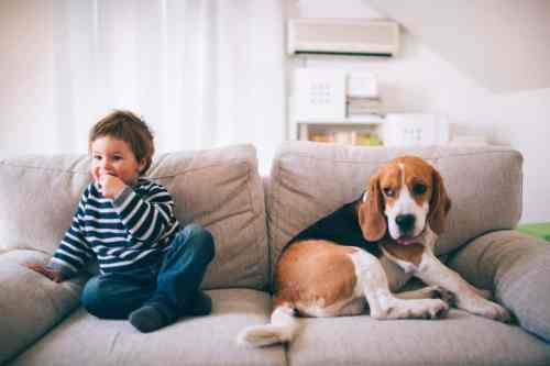 Are Beagles Good With Babies