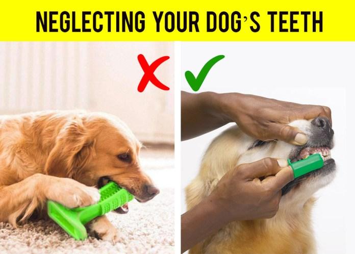 Brushing dog teeth