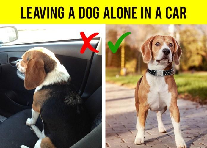 Leaving a dog inside a car