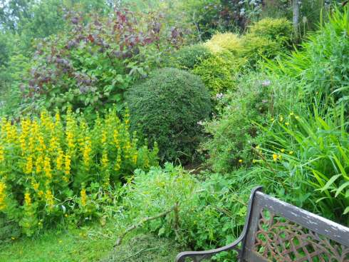 wild herbs at  Bealtaine Permaculture cottage