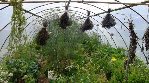 Dried herbs from Bealtaine Cottage