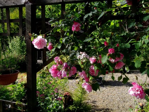 roses at bealtaine cottage