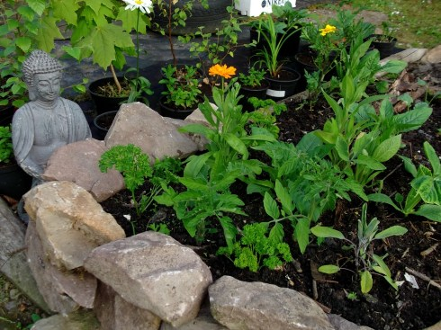 Raised Potager beds