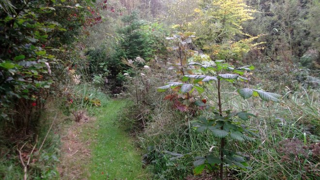 Autumn in permaculture at bealtainecottage.com 017