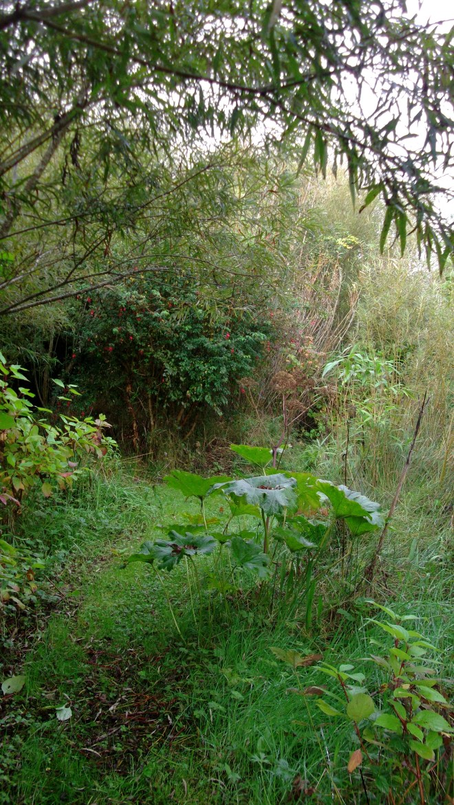 September Permaculture at bealtainecottage.com 001