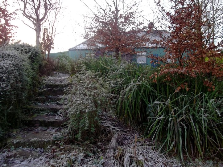 Bealtaine Cottage Permaculture Garden at Midwinter