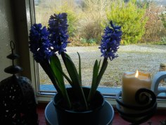 bealtaine-cottage-permaculture-march-2011-015