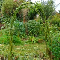 How To Make A Willow Arch For Your Garden...For Free