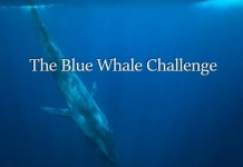 Blue Whale Challenge Game