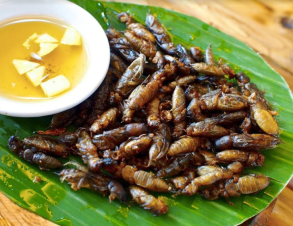 Camaru (fried crickets)