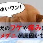 犬のフケはツメダニが原因