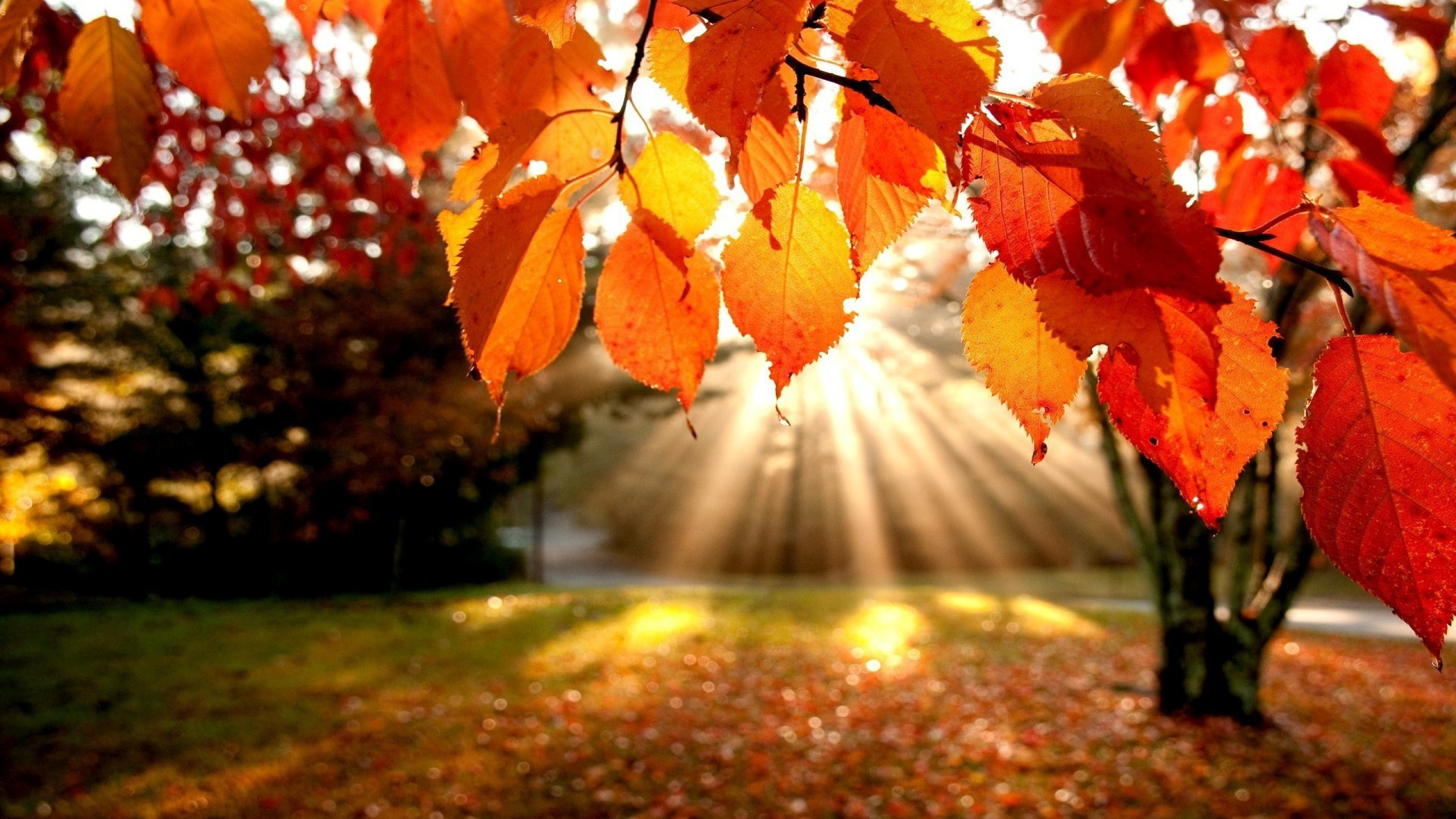 Summary of Ode to Autumn by John Keats - Beaming Notes