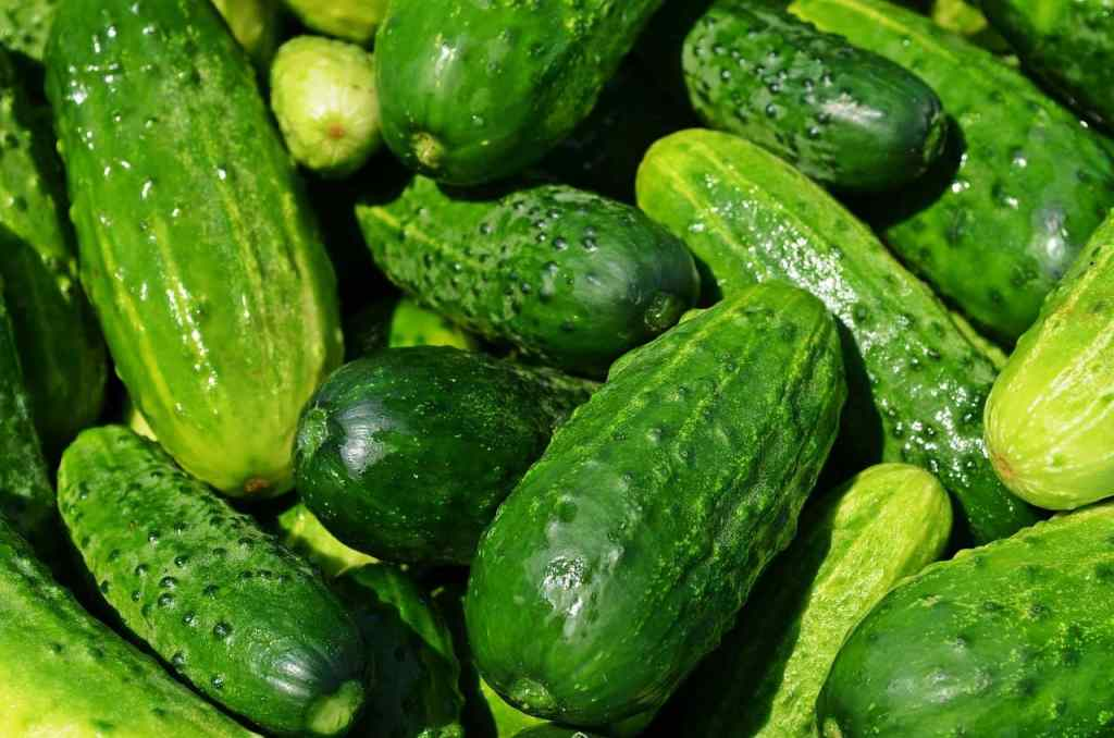 Cucumbers on the article How to Grow a Dosakaya Plant