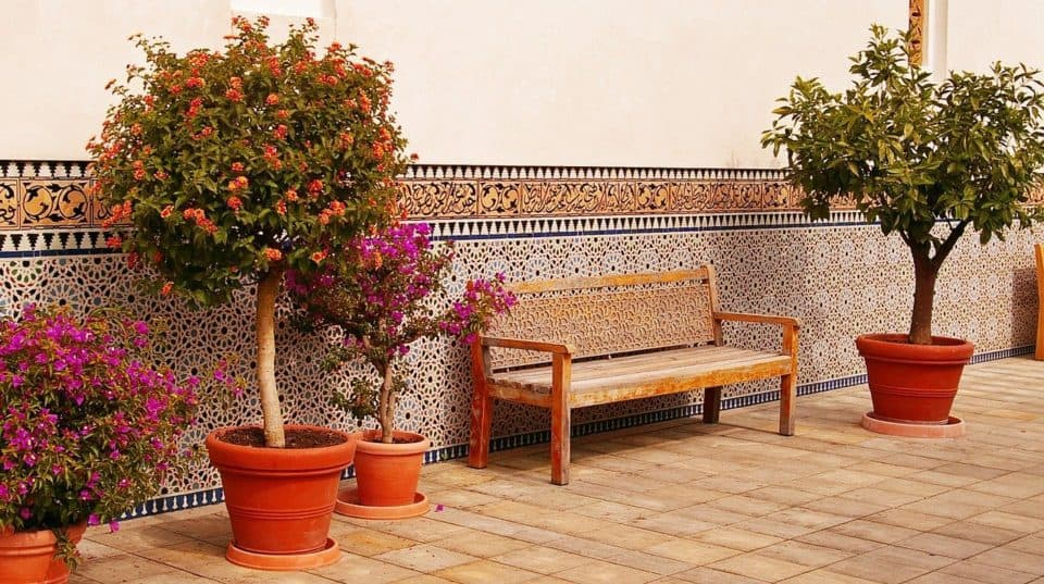 Top 5 Tall Potted Plants For Patio Privacy, Tall Potted Plants For Patio Privacy