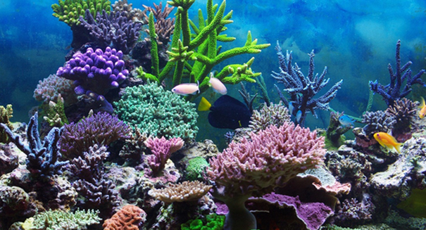 Image result for amazon coral reef