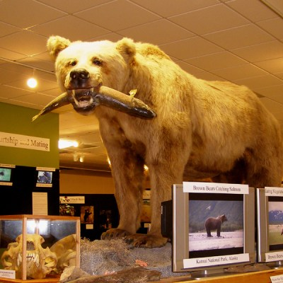 grizzly_fish_mount_800.jpg