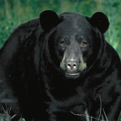 bear_facing.jpg