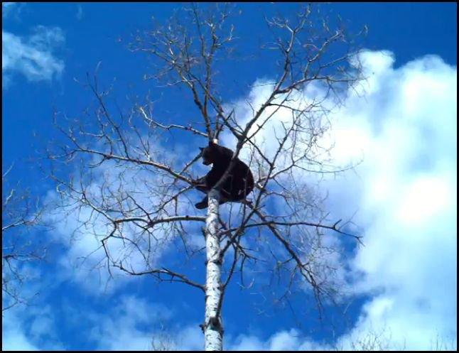 NABC-Lucky-Tree