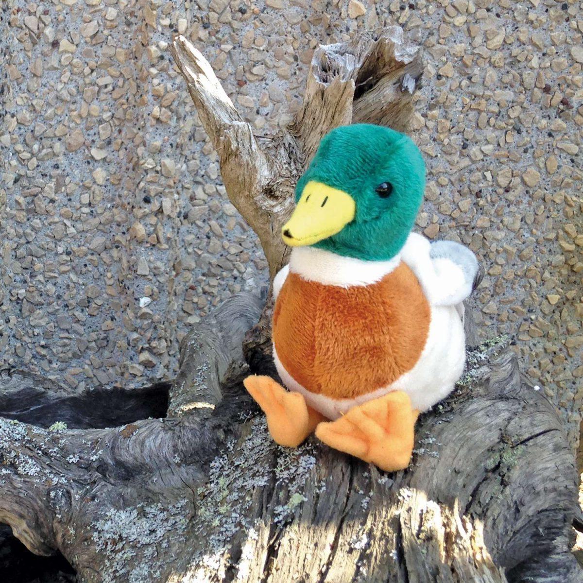 Mallard Duck North American Bear Center