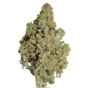 OG KUSH – Weed Rush   JUSTWEEDBARI