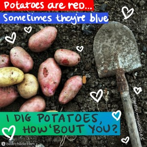 I dig potatoes, how 'bout you?