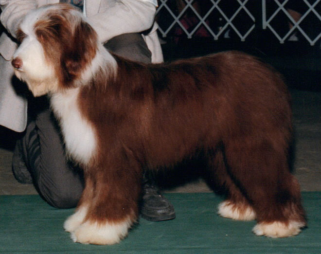 Report Of The Uk Bearded Collie Breed Liaison Mittee Health Survey 2007 2016
