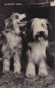 Two Beardies on an antique English postcard