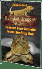 beardeddragonclimbingout
